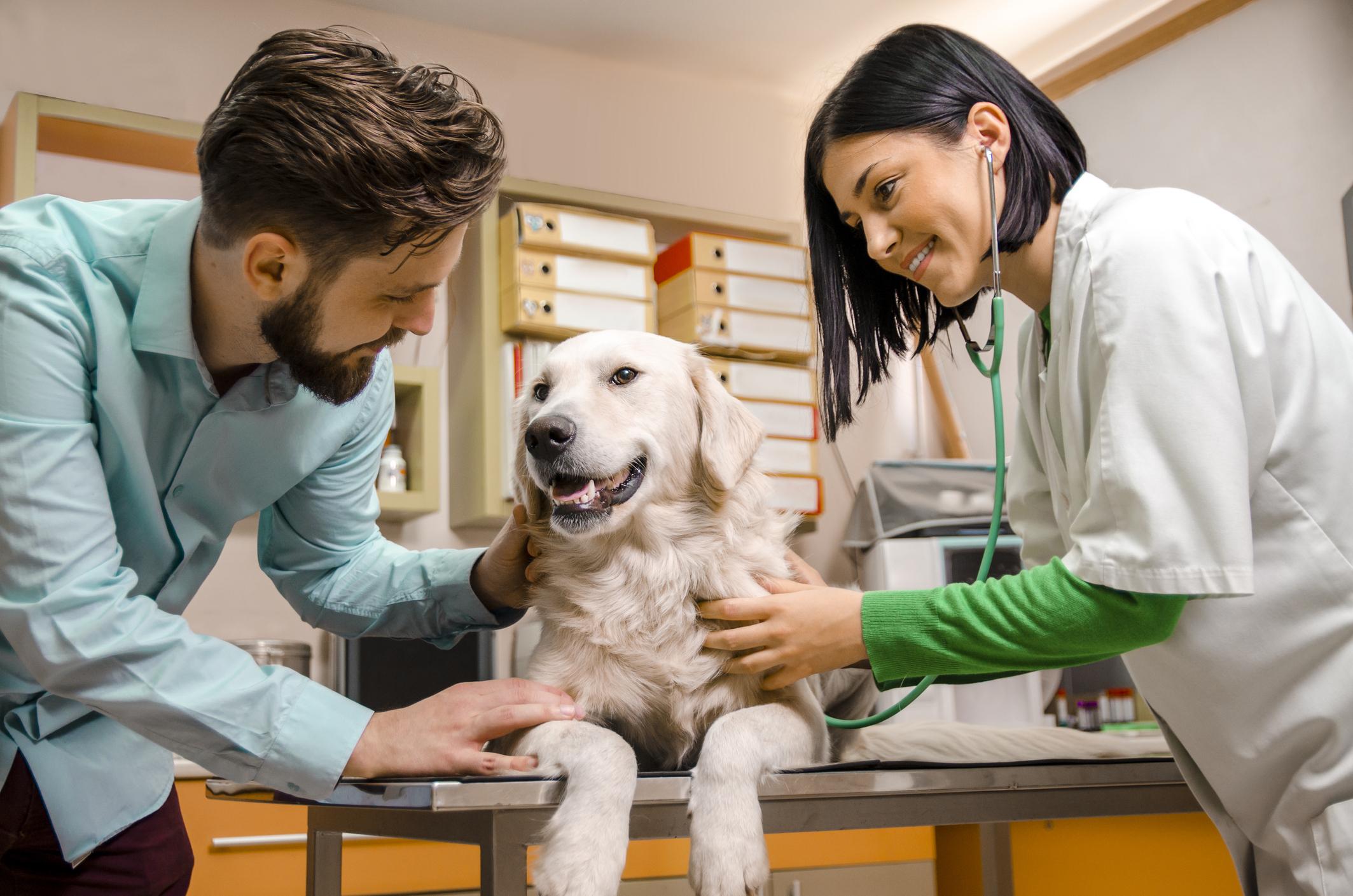 vet insurance